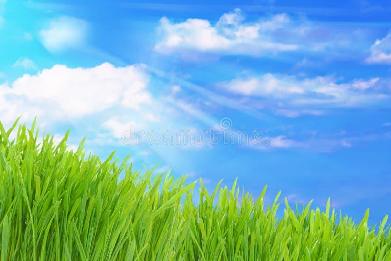 Grünes Gras und bewölkter Himmel lizenzfreie stockfotografie