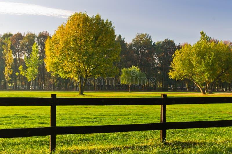 Grünes Gras und bunte Bäume umgeben durch einen Bretterzaun auf einem Golfplatz am sonnigen Morgen in Belgrad lizenzfreies stockfoto