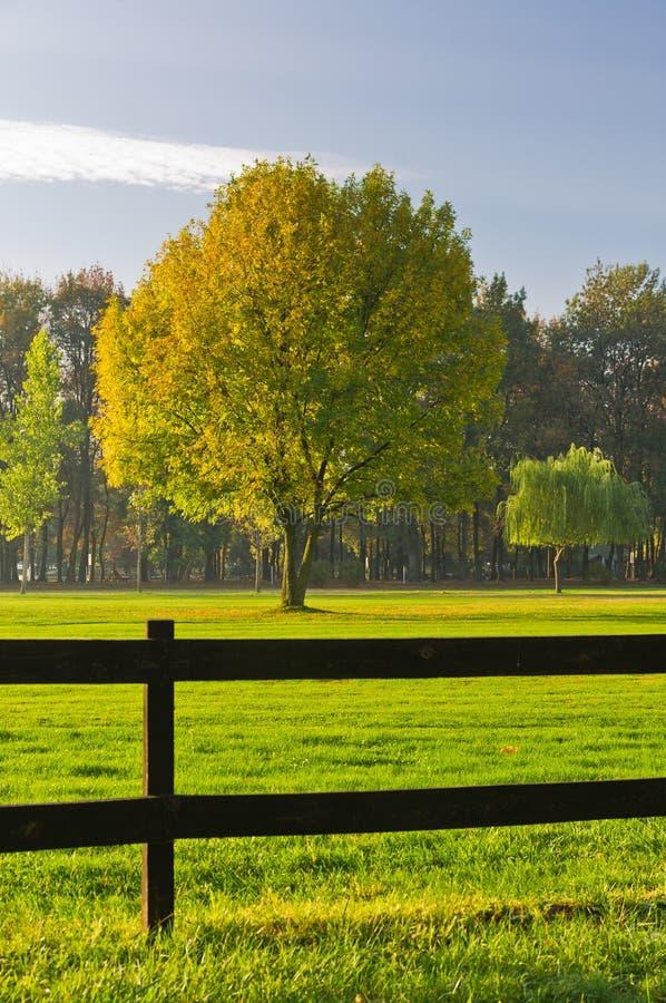 Grünes Gras und bunter Baum umgeben durch einen Bretterzaun auf einem Golfplatz in Ada-Binneninsel in Belgrad lizenzfreies stockbild