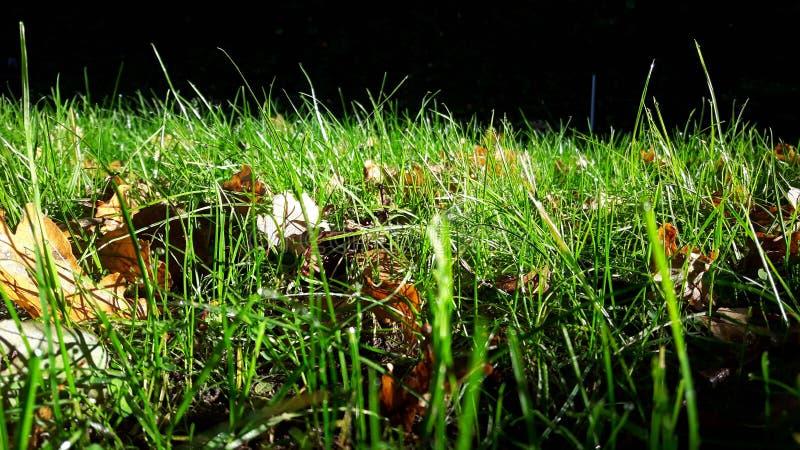 Grünes Gras und Herbstlaub stockbild