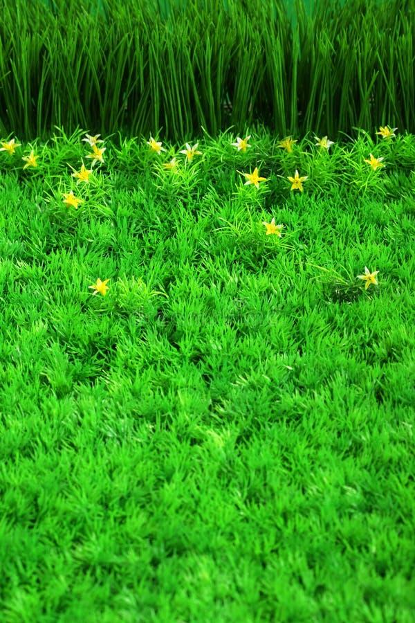Grünes Gras und kleine Blumen stockbilder