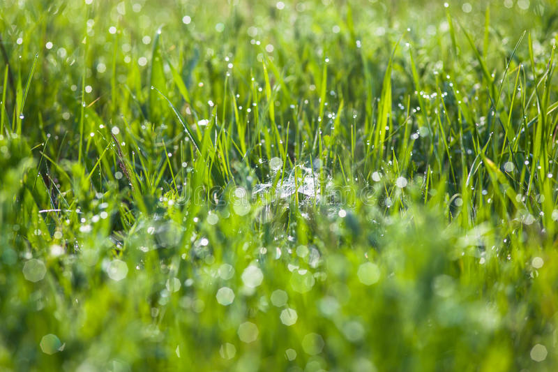 Grünes Gras und Spinne ` s Netz mit den Tautropfen, die der Sonne glänzen lizenzfreies stockfoto