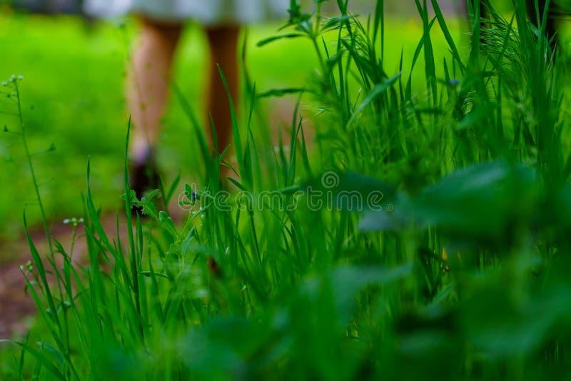 Grünes Gras und verschiedene Anlagen im Wald und in den weiblichen Beinen, die entlang den Weg auf dem Hintergrund gehen lizenzfreie stockfotografie