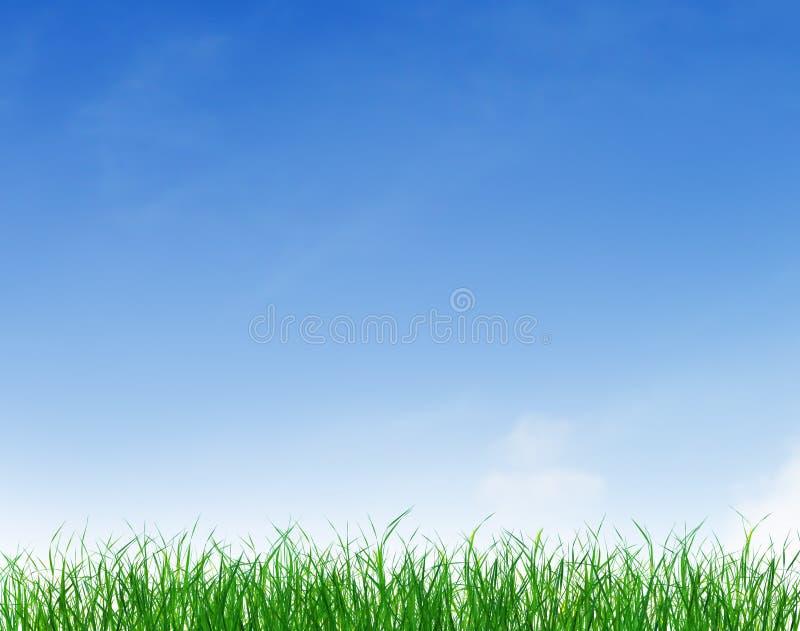 Grünes Gras unter blauem freiem Himmel stockfoto