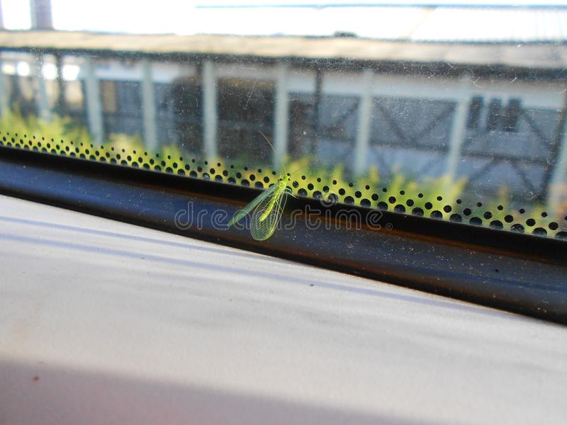 Grünes Insekt lizenzfreie stockfotos