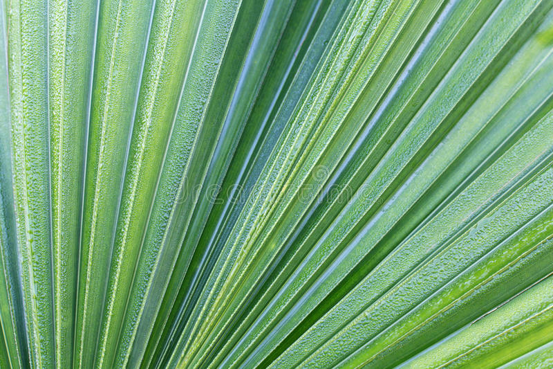 Grünes Kokosnussblatt lizenzfreies stockbild