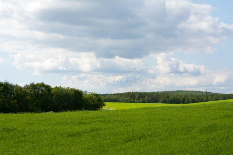 Grünes Kraut und Himmel der Tapete stockbilder