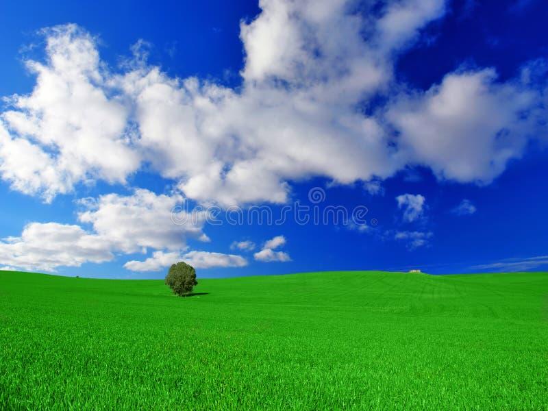 Grünes Land-Feld lizenzfreie stockbilder
