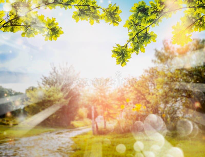 Grünes Laub über Landnaturhintergrund mit Sonne Strahlen und bokeh lizenzfreie stockfotos