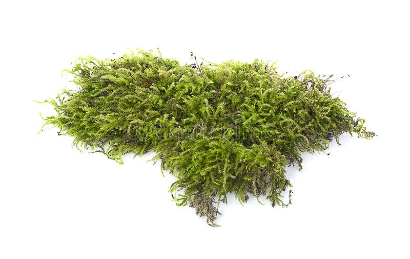 Grünes Moos lizenzfreie stockfotografie