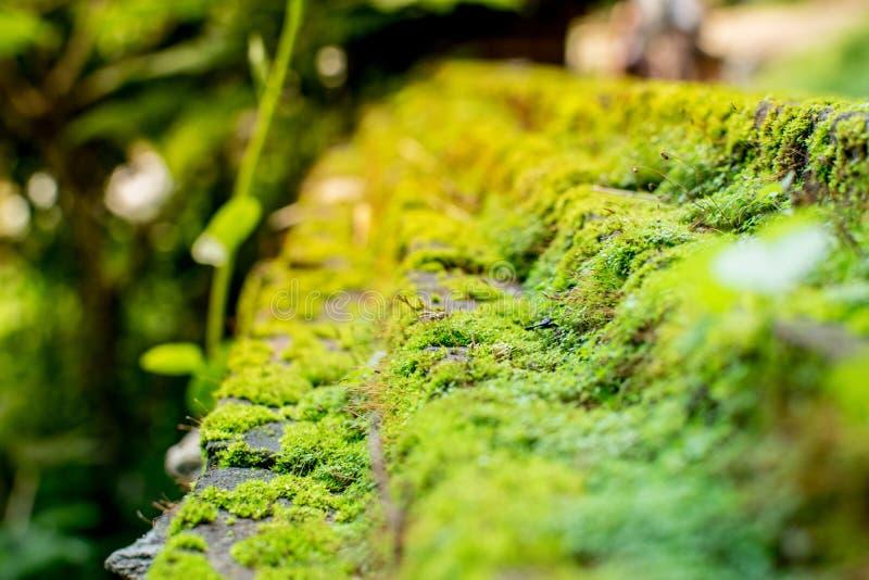 Grünes Moos, das auf dem Stein wächst stockfotografie