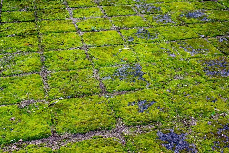 Grünes Moos in lanna Tempel lizenzfreie stockfotografie