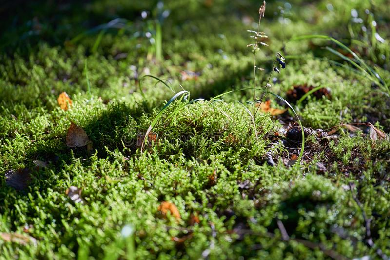 Grünes Moos und Gras in der Sonne stockbild