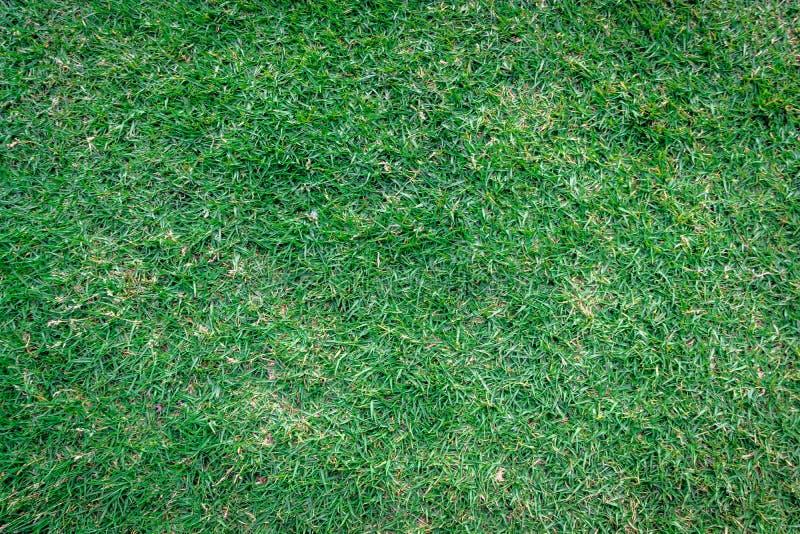 Grünes Muster des Grases in den Detailhintergründen stockbilder