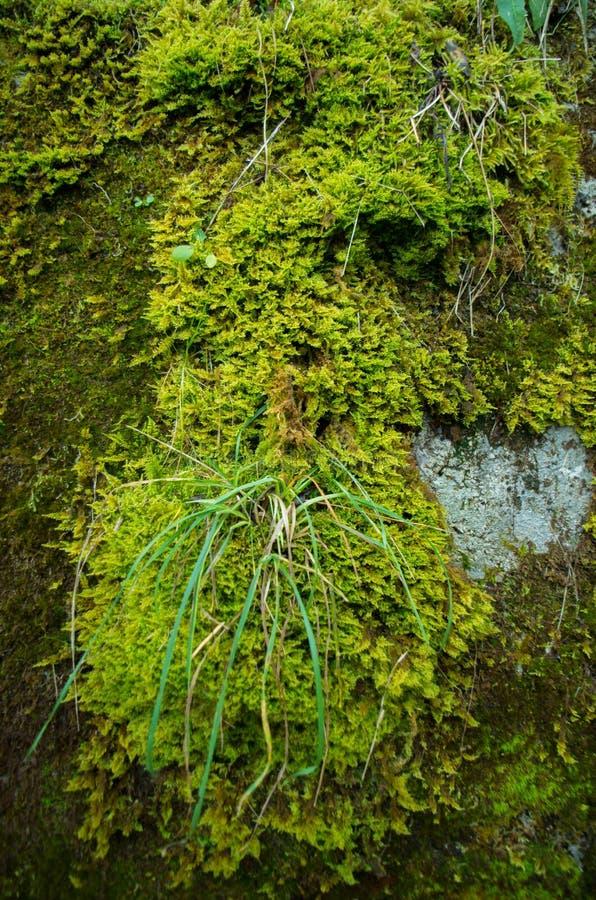 Grünes nasses Moos lizenzfreie stockfotografie