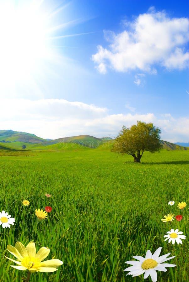 Grünes Paradies lizenzfreie stockbilder