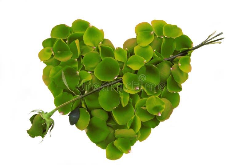 Grünes Rosen-Blumenblatt-Inneres mit Pfeil stockbilder