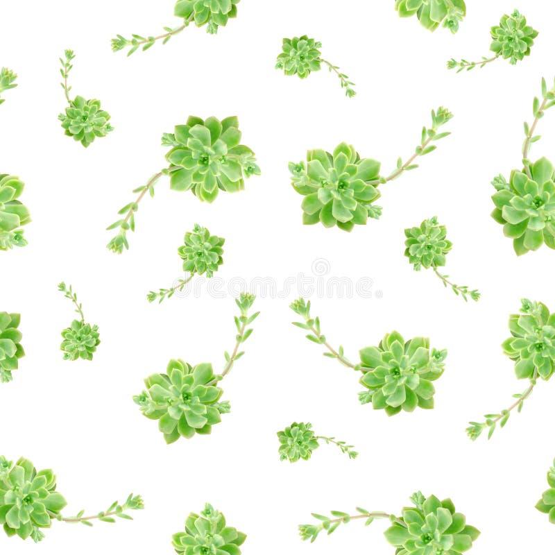 Grünes saftiges Betriebsmuster-weißer Hintergrund stockfoto