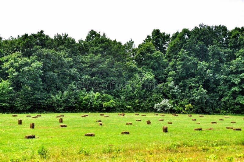 Grünes schräges Feld und die Garben des Heus stockbild