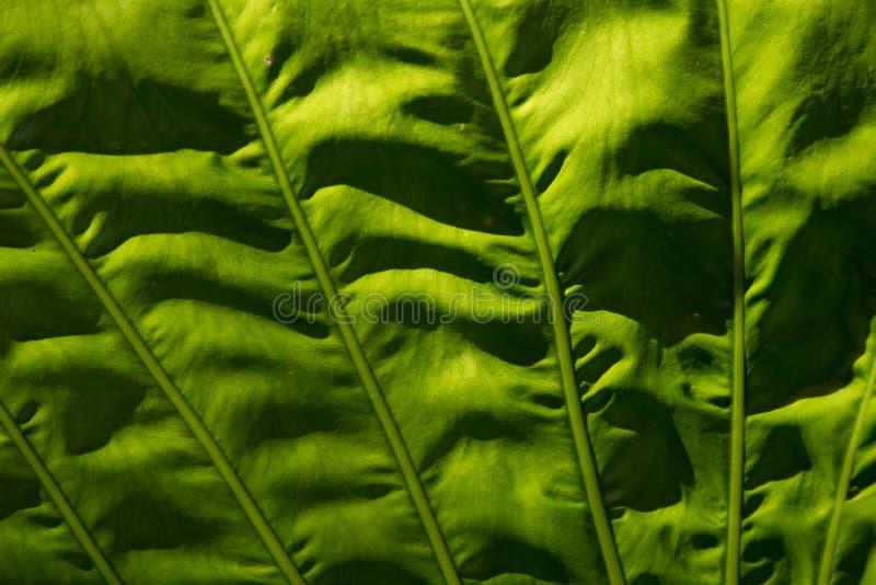 Grünes Segel stockbild