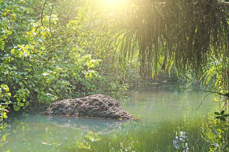 Grünes Smaragdjadewasser ist ein Fluss der Tropenstrahlen des s stockbild