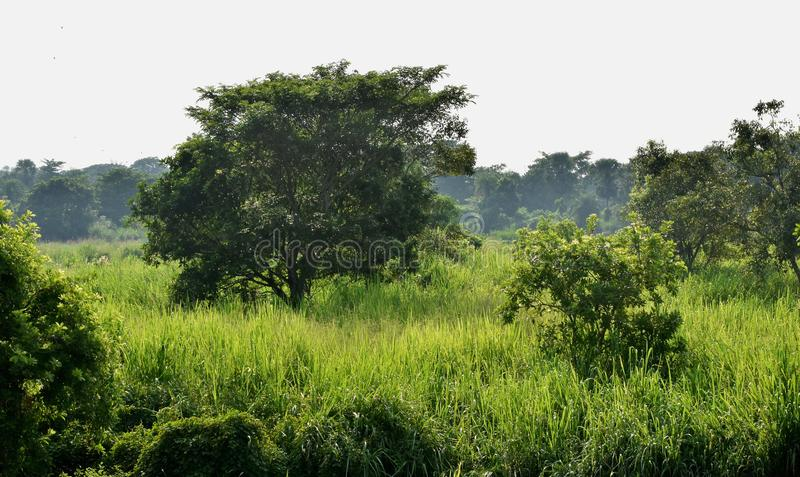 Grünes Tal stockbilder