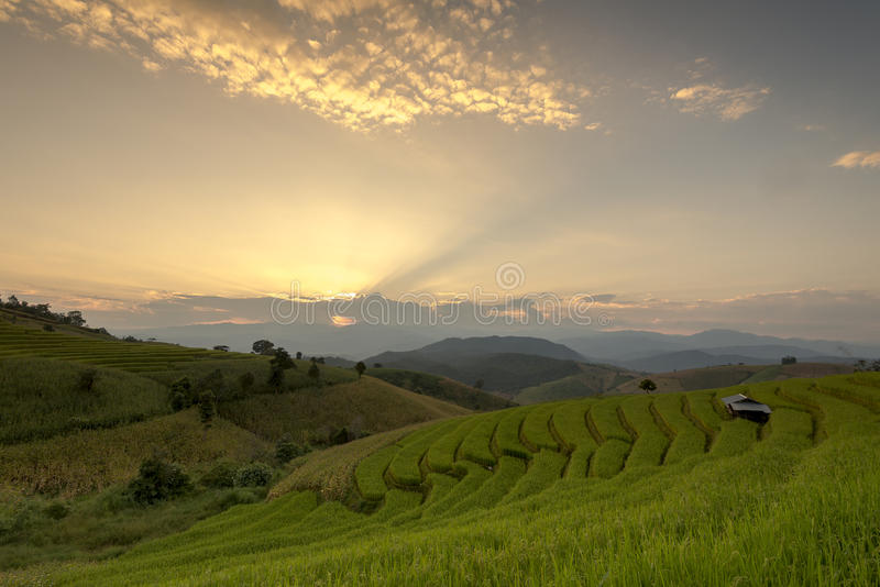Grünes terassenförmig angelegtes Reis-Feld während des Sonnenuntergangs an Verbot-PA Bong Peay in C lizenzfreie stockfotografie