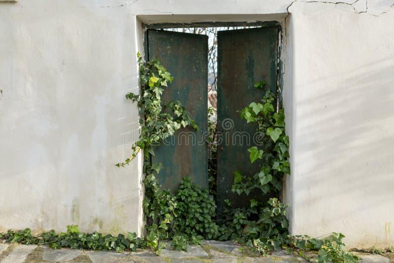 Grünes Tor überlaufen durch Efeu stockbild