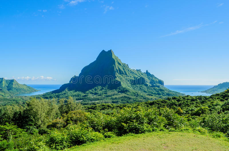 Grünes tropisches Moorea stockfoto