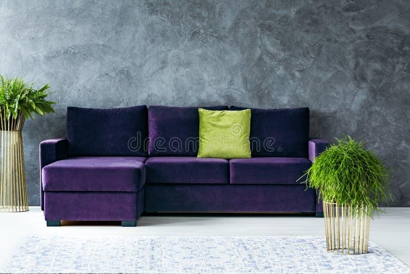 Grünes und purpurrotes Wohnzimmer stockfoto