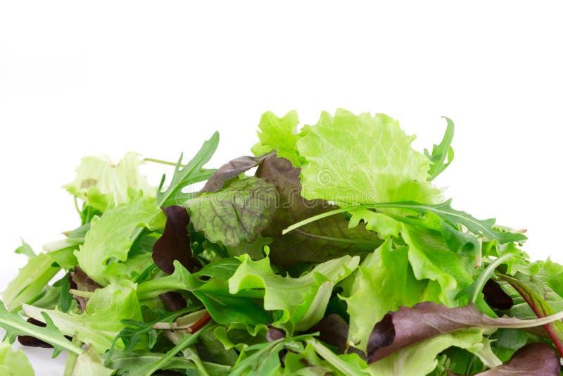 Grünes und rotes Blatt des Kopfsalates lizenzfreies stockfoto