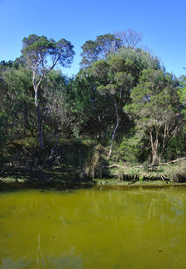 Grünes Wasser auf hässlichem verlassenem Nebenfluss stockbild