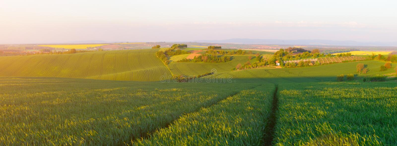 Grünes Weizenfeld im Abendsonnenlicht lizenzfreies stockbild