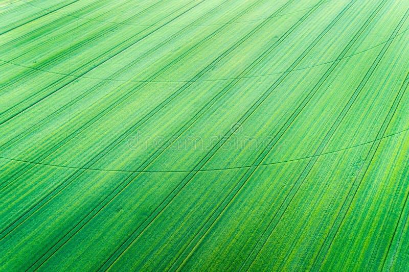 Grünes Weizenfeld mit Mittelbewässerungssystembahn lizenzfreie stockfotografie