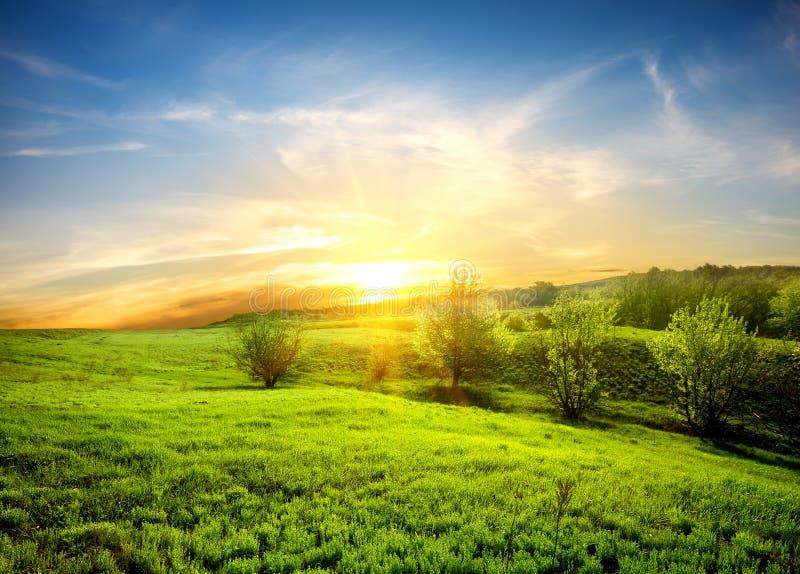 Grünfelder des Grases stockfotos