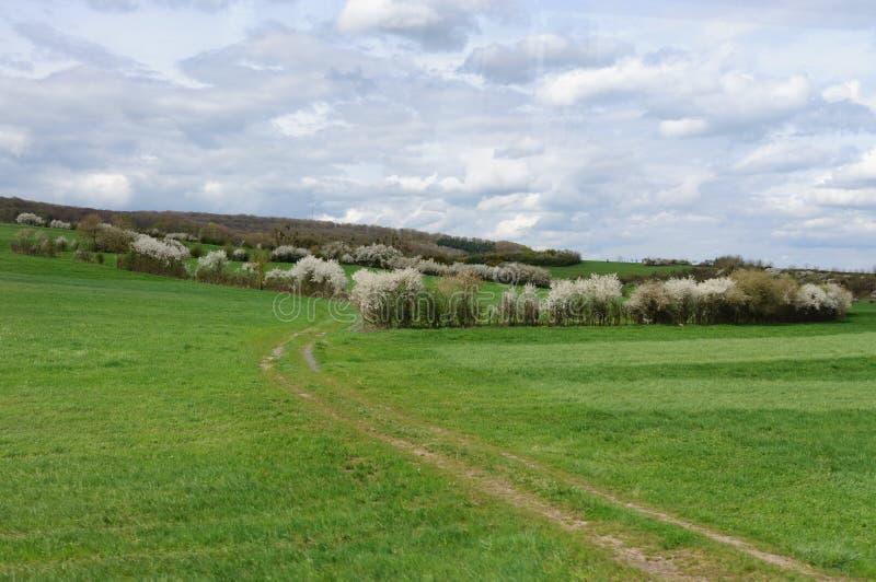 Grünfelder am Frühling stockfotos