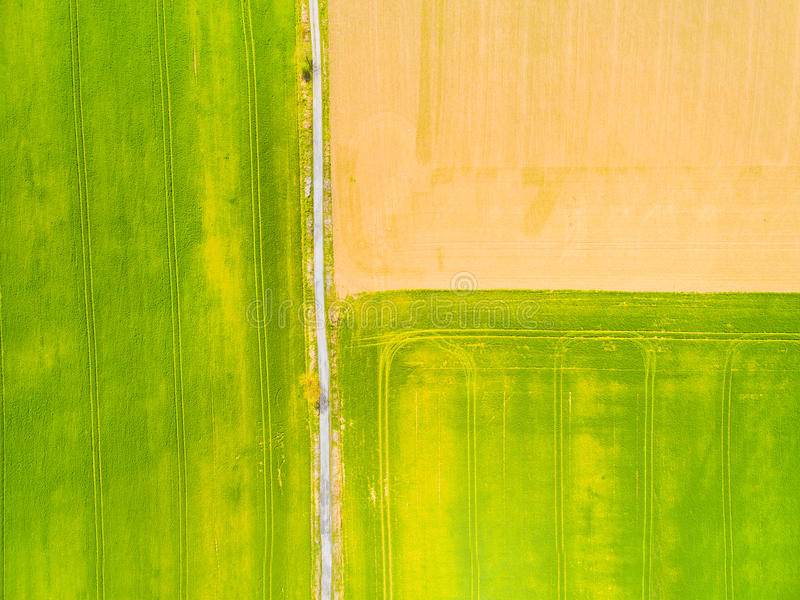 Grünfelder mit geometrischem Muster stockfotos