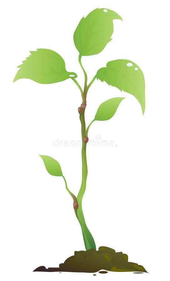 Grünpflanze vektor abbildung