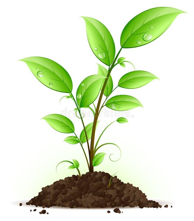 Grünpflanze stock abbildung