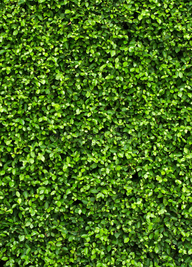 Grünpflanze auf der Wand stockfotos