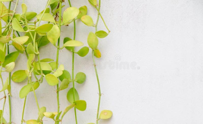 Grünpflanze auf Wand stockbild