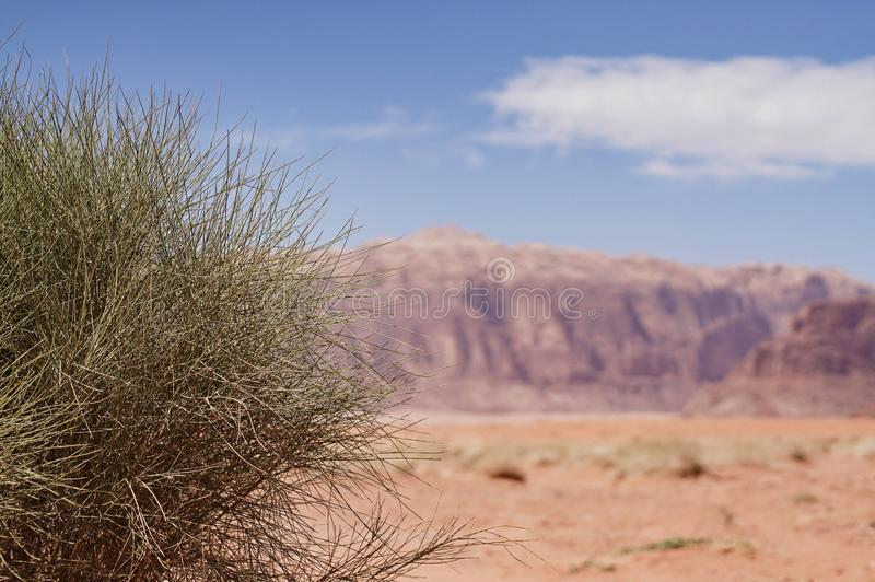 Grünpflanze in der Wüste Oase stockbilder