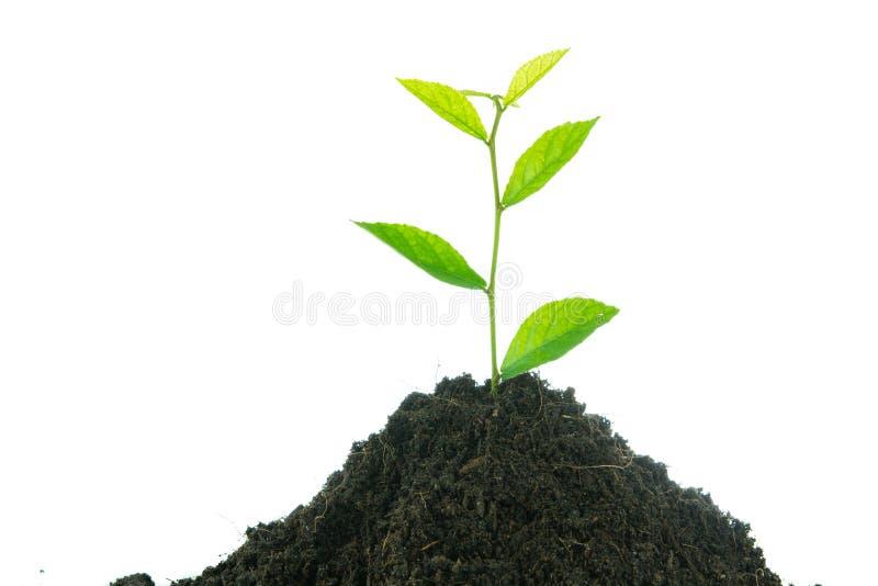 Grünpflanze des jungen kleinen neuen Lebens stockbilder
