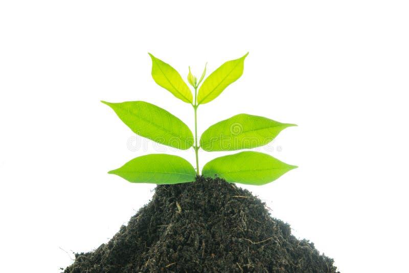 Grünpflanze des jungen kleinen neuen Lebens lizenzfreie stockbilder