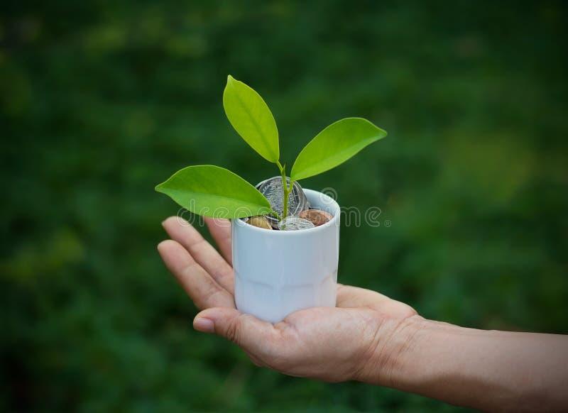Grünpflanze, die an Hand aus Münzen im weißen Naturhintergrund der Schale heraus wächst lizenzfreie stockfotos