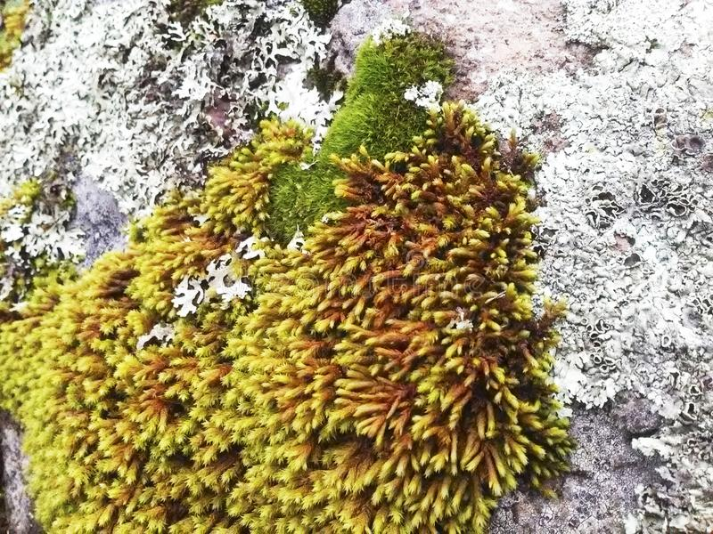 Grünpflanze-Erdplanet der Felsenrosthinterunterholznatur lizenzfreie stockfotos
