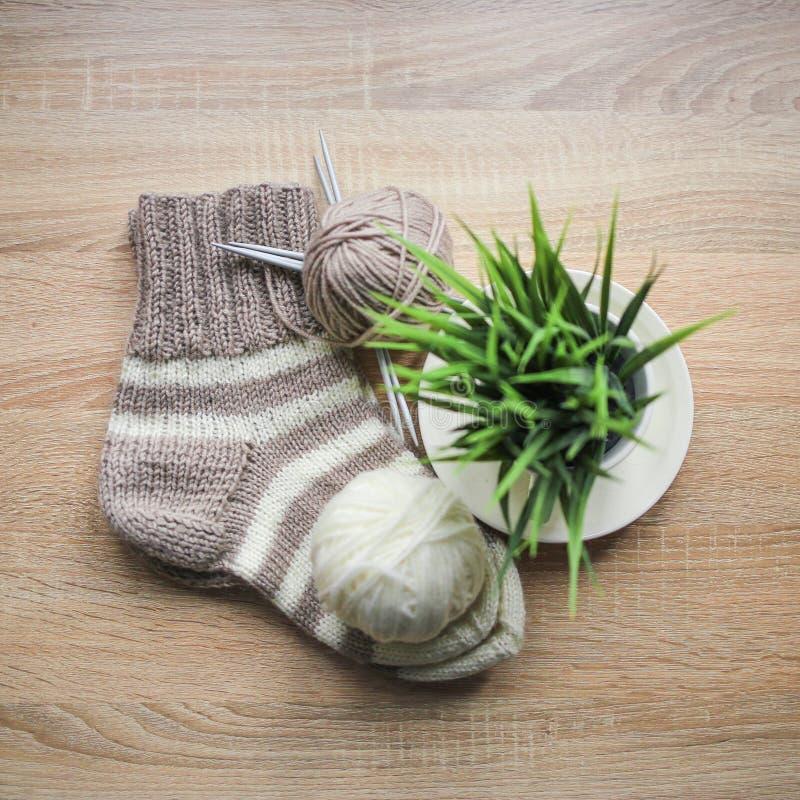 Grünpflanze im der Stricknadeln, Beige und weißen Garn des Topfes, Knitted streifte beige-beige Socke sind auf dem Tisch lizenzfreies stockfoto