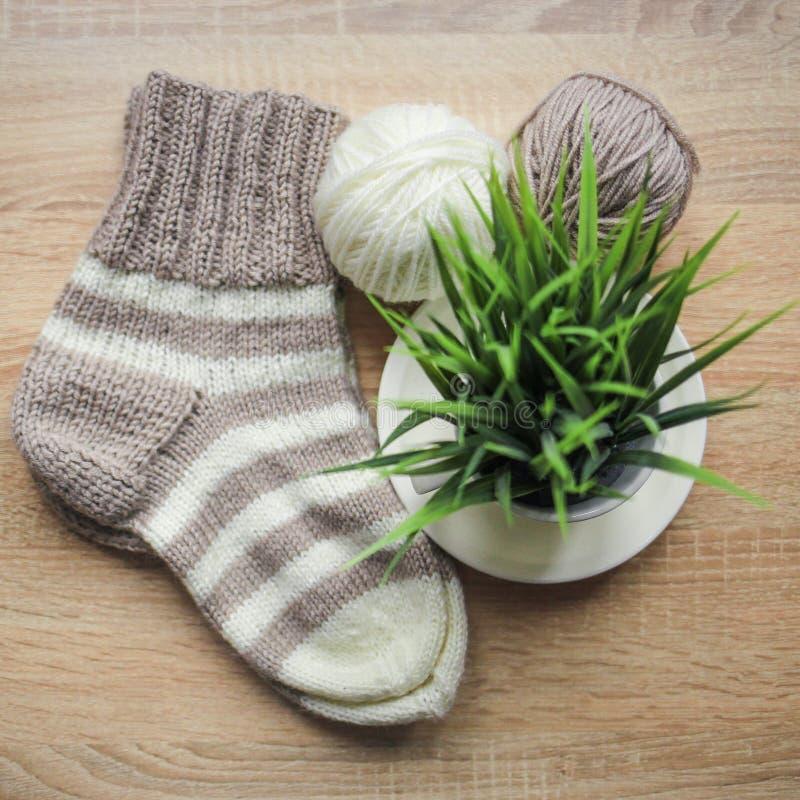 Grünpflanze im der Stricknadeln, Beige und weißen Garn des Topfes, Knitted streifte beige-beige Socke sind auf dem Tisch stockfotos