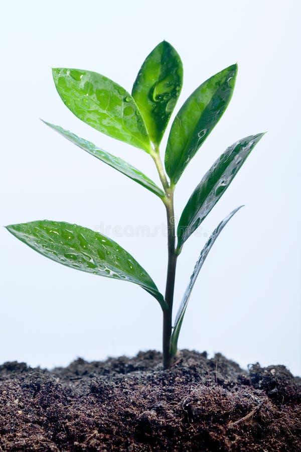 Grünpflanze im Tau stockfotos