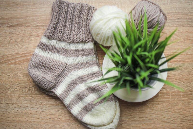 Grünpflanze im Topf-, Beige und weißengarn, Knitted streifte beige-beige Socke sind auf dem Tisch lizenzfreie stockfotos